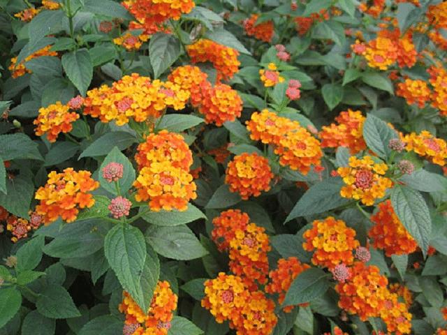 Hoa ngũ sắc rực rỡ ngày Tết