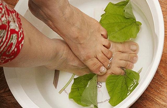 Cách chữa trị mồ hôi tay chân bằng lá lốt.